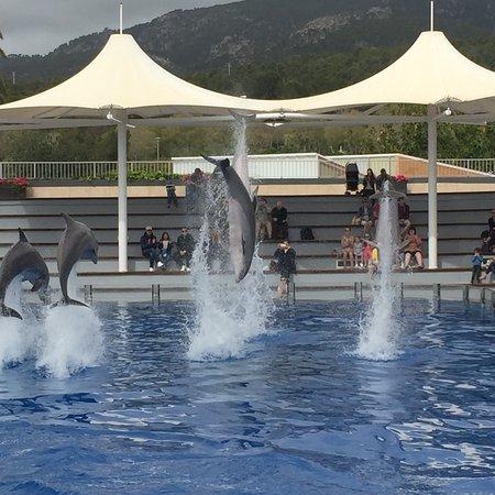 Marineland Majorca: photo0.jpg