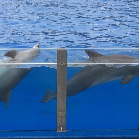 Marineland Majorca: photo1.jpg