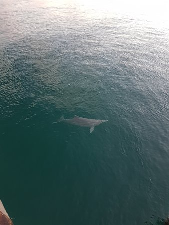 Amity, Australia: dolphin by jetty2