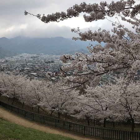 Beautiful park with whole mountain of sakura