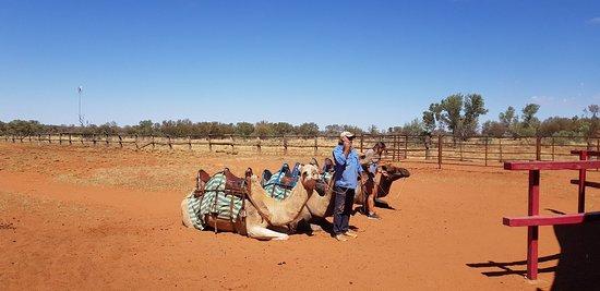 Camels Australia: 20180405_114418_large.jpg
