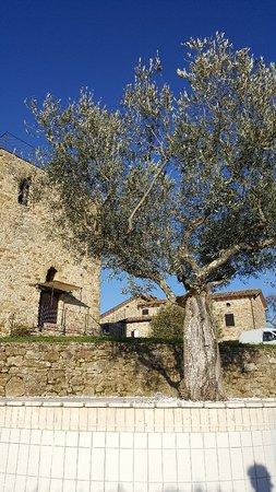 Monte Santa Maria Tiberina, Italia: 20180401_181811_large.jpg
