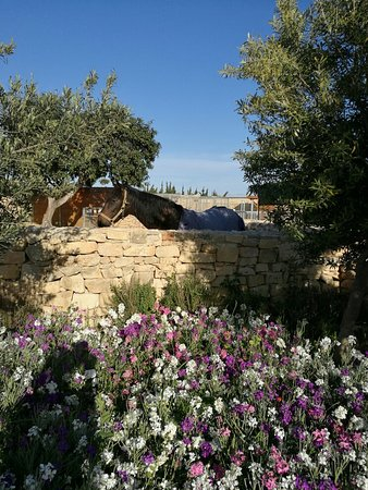 Lovely play area at Sant'Antnin family park,Mscala,Malta