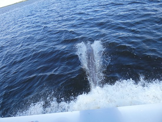 dolphin racing boat - Picture of King Fisher Fleet, Punta Gorda