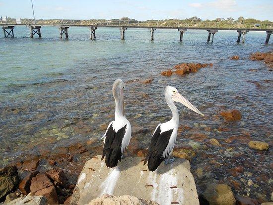 Kingscote, Australia: F 4