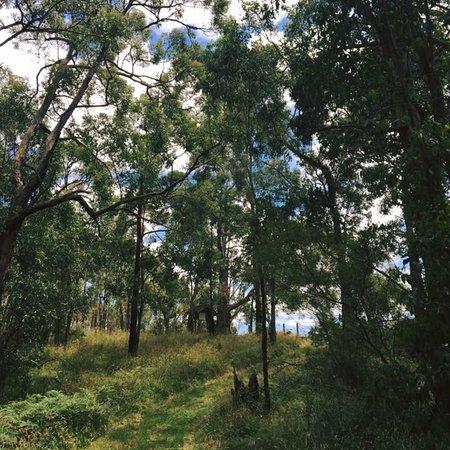 Henry Littledyke Reserve