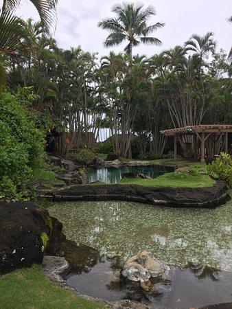 Na Aina Kai Botanical Gardens: A kiddy pool and a 14-foot deep swimming pool.