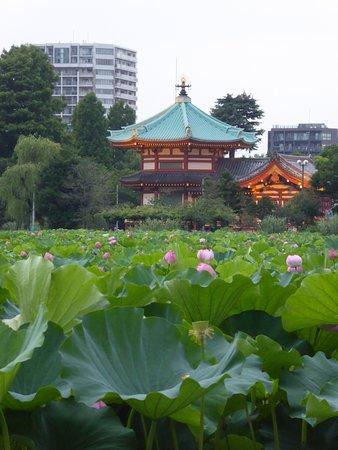 lotus pond in Ueno Park