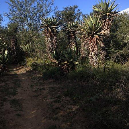 Bontebok National Park: photo3.jpg