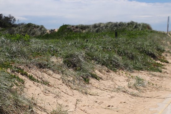 V-Wall: The dunes were nearby