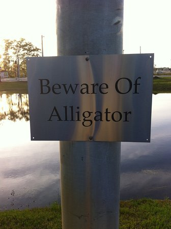 "Garden City, GA: There is ""a baby alligator"" in the pond according to the desk help."
