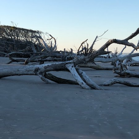 Big Talbot Island State Park : photo1.jpg