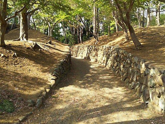 Ishizuka Forest