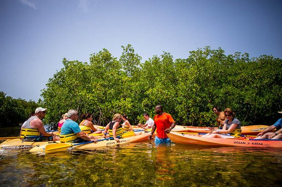 Island Safari Eco Kayak & Snorkel
