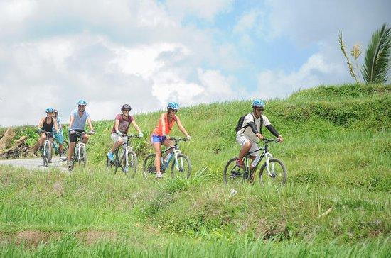 Jatiluwih Rice Paddy Cycling - True...