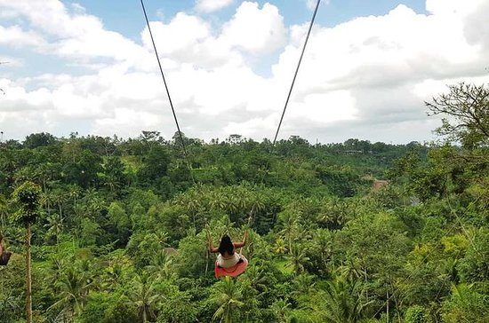 Bali Swing Sacred Monkey Forest y...