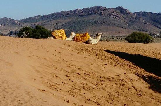 Full Day Safari Small Desert With...