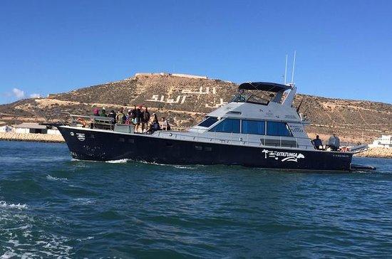 Excursion en bateau à Agadir avec...
