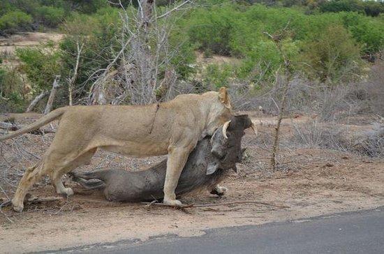 Kruger National Park4days&3nights Tour