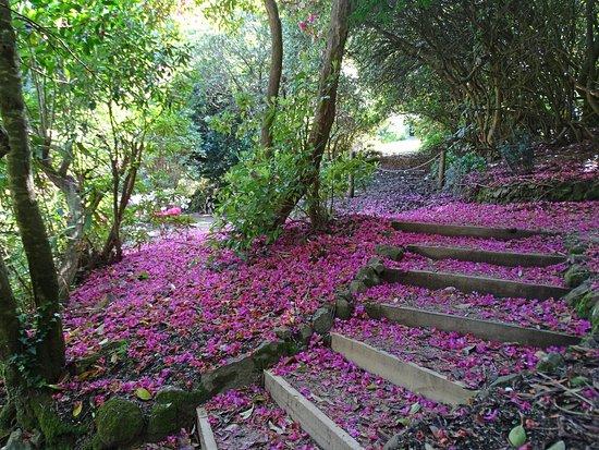 Foto de Woolrich Historic Garden Accommodation