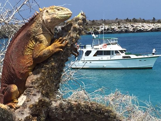 Puerto Ayora, Ecuador: Land iguana at South Plazas