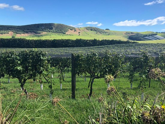 Te Motu Vineyard