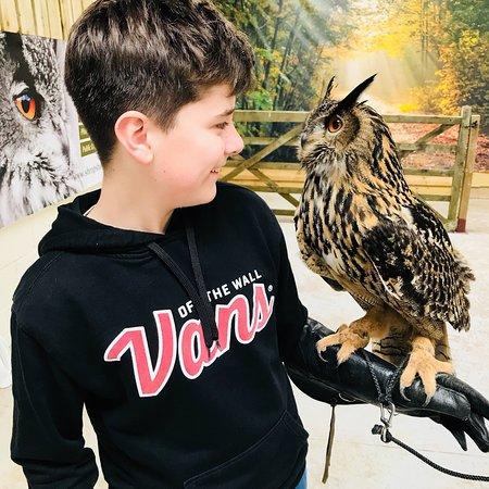 Shropshire Falconry Ltd : Owl experience at Shropshire Falconry