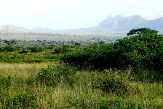 Tsavo, Quênia: Paesaggio 3
