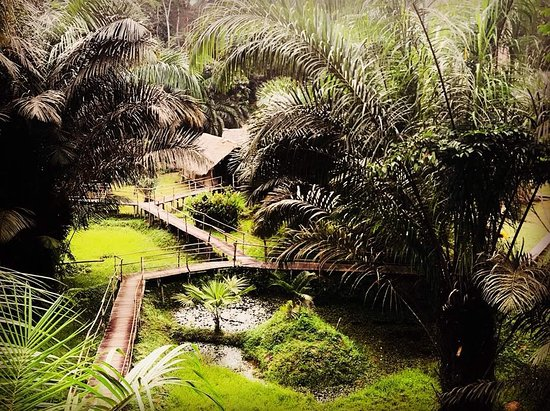 Nkolmetet, Cameroon: IMG-20180401-WA0013_large.jpg