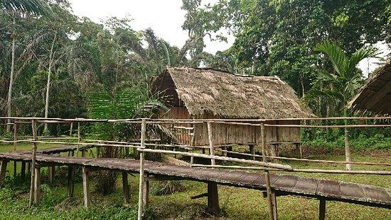 Nkolmetet, Cameroon: DSC_0061_large.jpg