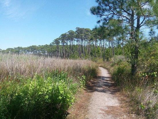 Grayton Beach State Park Santa Rosa Beach Florida Reviews