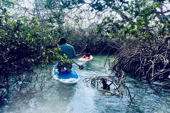 Paddle Boarding Picture Of Keys Boat Tours Big Pine Key Tripadvisor