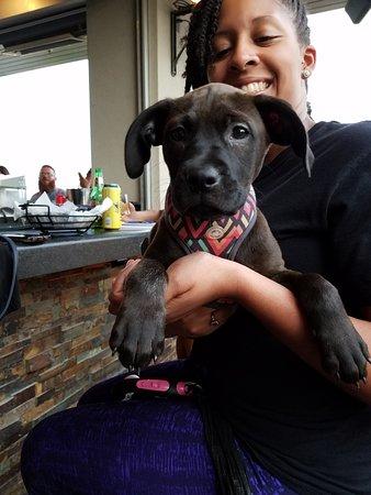 Coco. Dog of Austin.