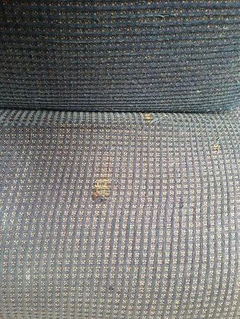 Douglas Fir Resort & Chalets: The couch has seen better days.