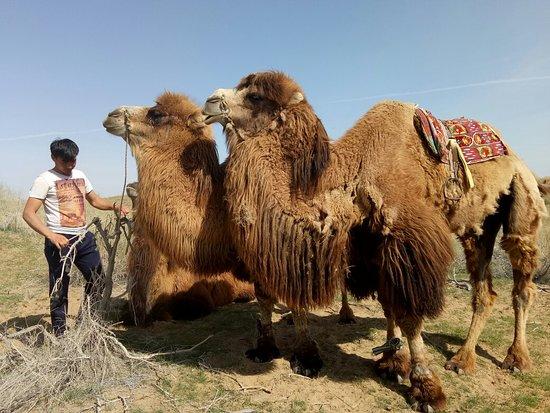 Tashkent Province, Özbekistan: IMG20180405102224_large.jpg