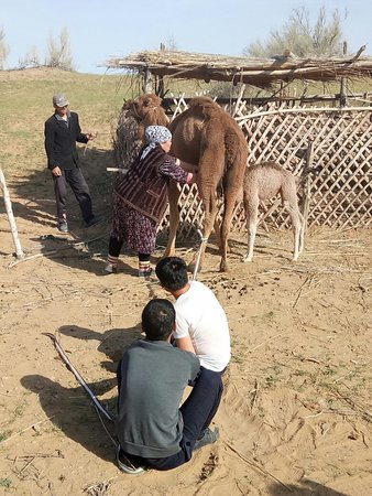 Tashkent Province, Usbekistan: IMG20180405090233_large.jpg