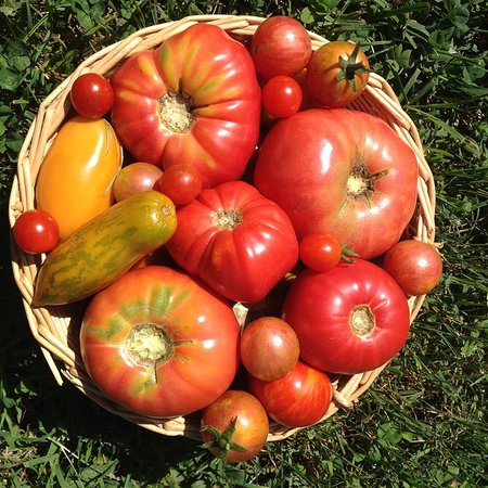 Evendale, OH: best tomatoes ever!