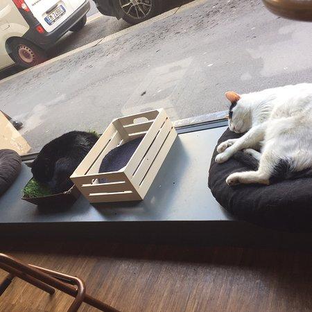 Crazy Cat Café Photo
