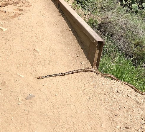 Altadena, CA: Trail snake!! Anyone know what kind it is? No rattle