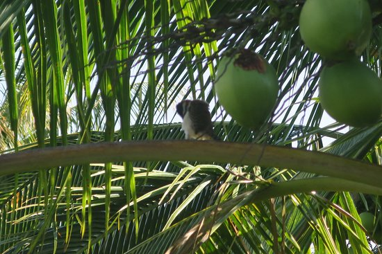 Vista Canyon Inn: A bird in the coconut tree outside our room