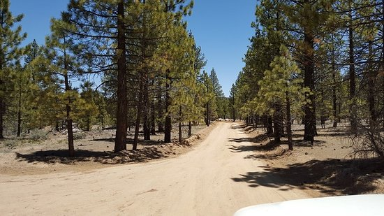 Big Bear Lake, CA: Well maintained roads through most of Gold Fever Trail.
