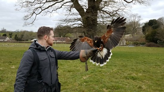 West of England Falconry: 20180322_122240_007_large.jpg