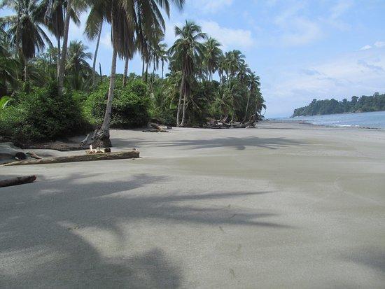 Playa Palmeras, certificada con bandera azul. Isla Gorgona