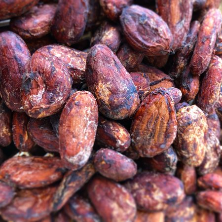 Kilauea, Χαβάη: Cacao pods and cacao beans