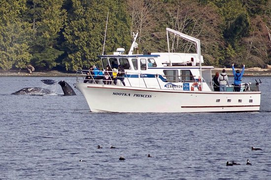 Ucluelet, Canadá: Our vessel alongside 2 Gray Whales