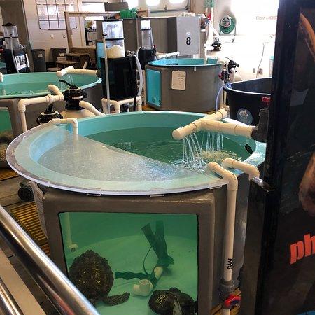 photo8.jpg - Picture of North Carolina Aquarium on Roanoke ...