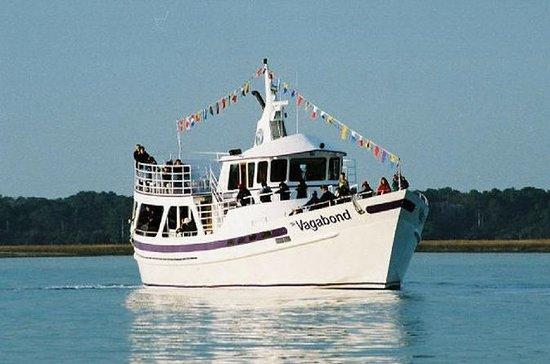 Dolphin Ocean Cruise