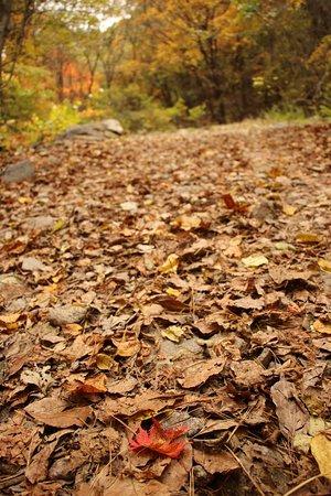 Gyeongsangbuk-do, Νότια Κορέα: fall foliage