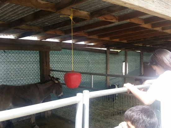 Pony Time at Lakewood Equestrian center: Fun petting zoo