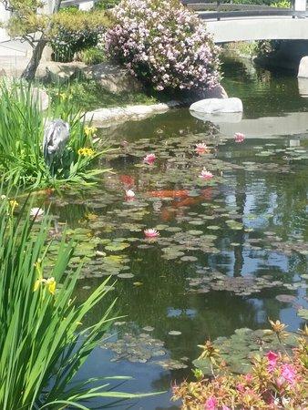 Earl burns miller japanese garden long beach 2018 all for Csulb japanese garden koi pond